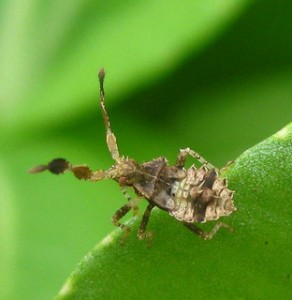 A bug on a leaf