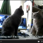 A cat video on YouTube