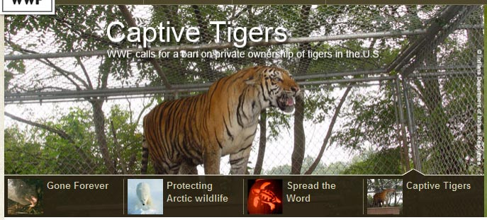 A slider featuring four articles on the homepage of the World Wildlife Fund