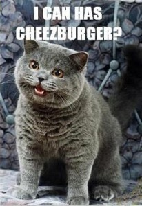 "The [in]famous ""I Can Haz Cheezburger?"" Happy Cat."
