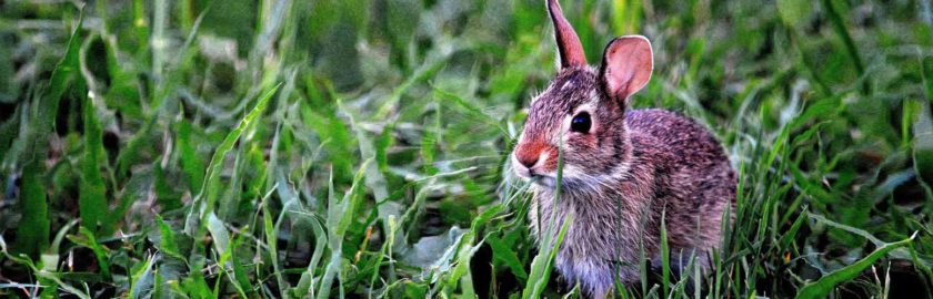 A cute bunny in some verdant grass